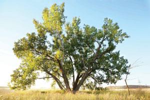 tree-300x200